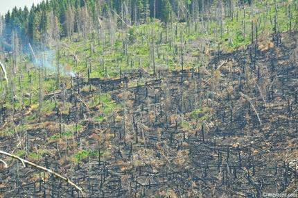 burnt_area.jpg